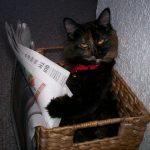 Kitap okuyan kediler, bazı insanları utandırıyor!