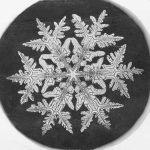 Wilson Bentley: Her bir kar tanesi eşsizdir!