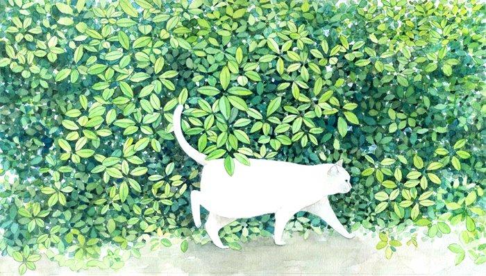 midoru yamada cat