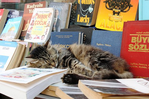 kitaplık kedisi