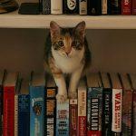 Kitaplar ve Kediler
