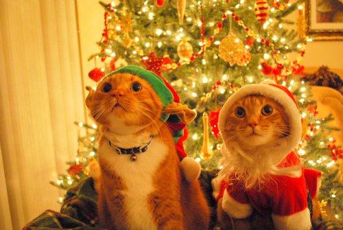 yılbaşı kedileri