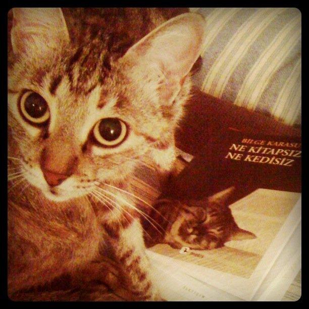 Bilge Karasu Ne Kitapsız Ne Kedisiz