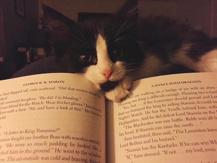 Daha Çok Kitap Okumak İçin Kısa Bir Rehber