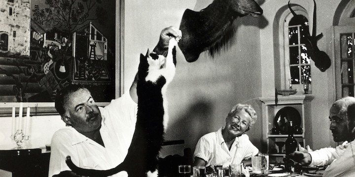kediler ve yazarlar