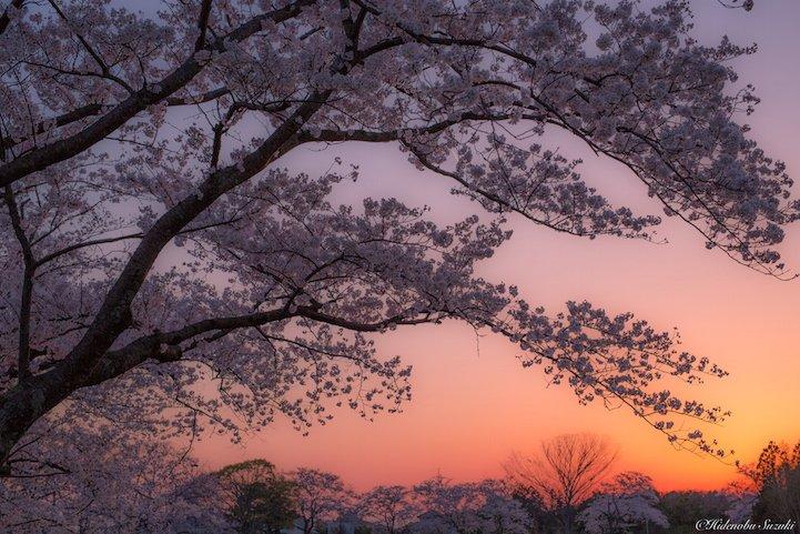 Japonya fotoğrafları6