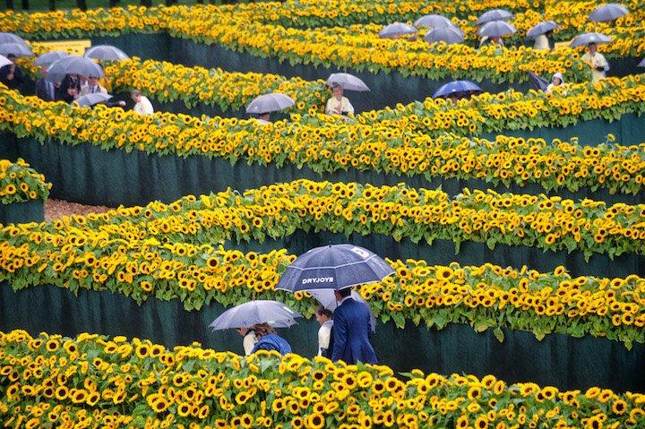Van Gogh Müzesi Yeni Girişine Ayçiçeği Labirenti!