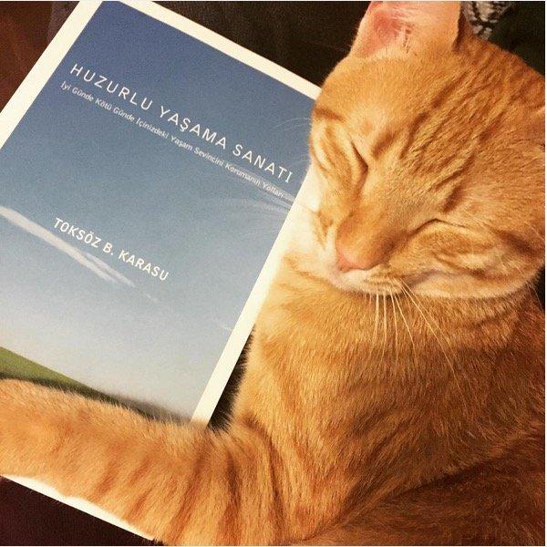 Huzurlu Yaşama Sanatı - Toksöz B. Karasu kitaplık kedisi