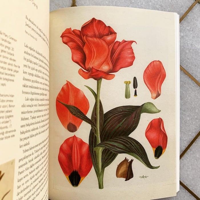 Dünyamızı Biçimlendiren Olağanüstü Bitkiler - Helen & William Bynum