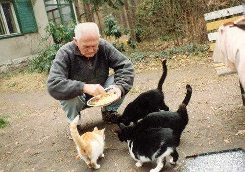All My Cats - Bohumil Hrabal