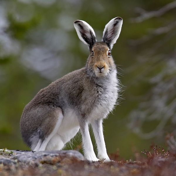 Tavşan Yılı - Arto Paasilinna